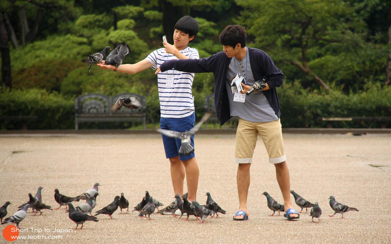 喂鸽子都少年,貌似是韩国来的。