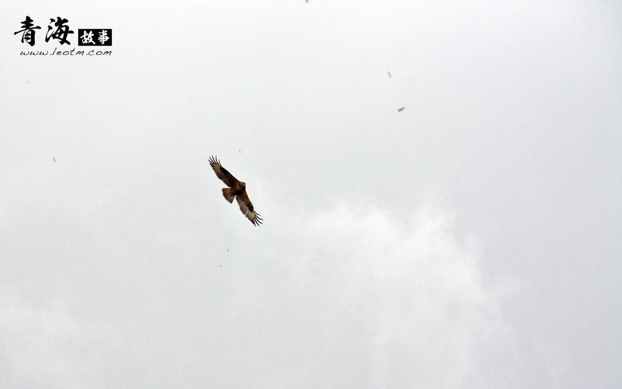 高山顶上翱翔着的雄鹰