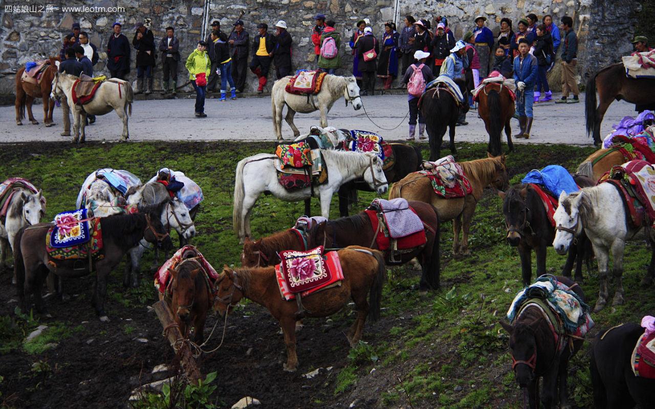 入口处等待被选的马匹和养马人