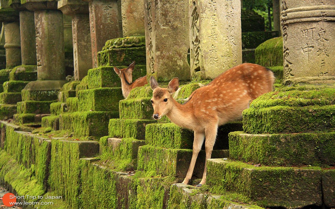 随处可见的小鹿