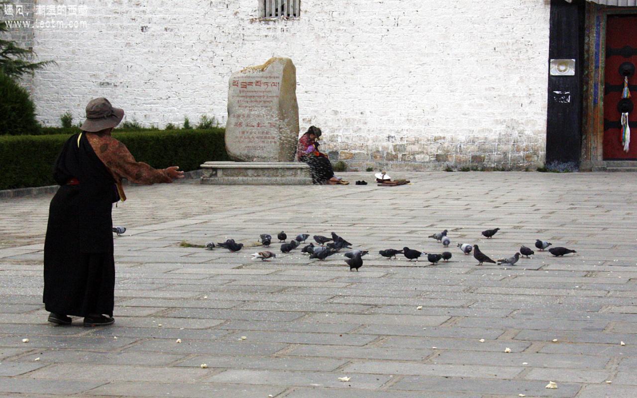 老奶奶又开始喂鸽子了。