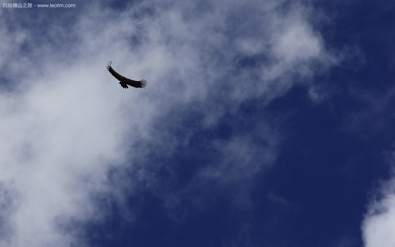 翱翔的老鹰