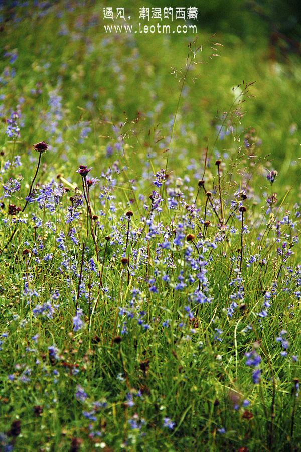 草场上的小花