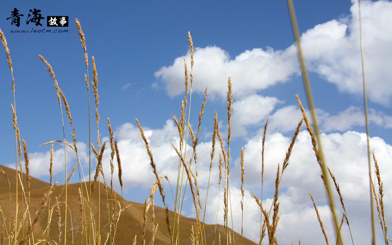 阿柔草原的美景
