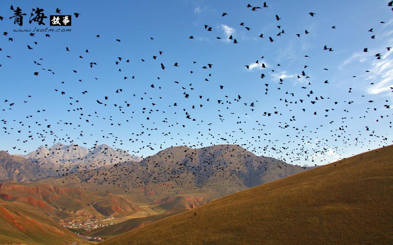 卓尔山景区外的乌鸦群,话说看到如此多的神鸟,是不是为我日后的好运气奠定了好的基础呢?