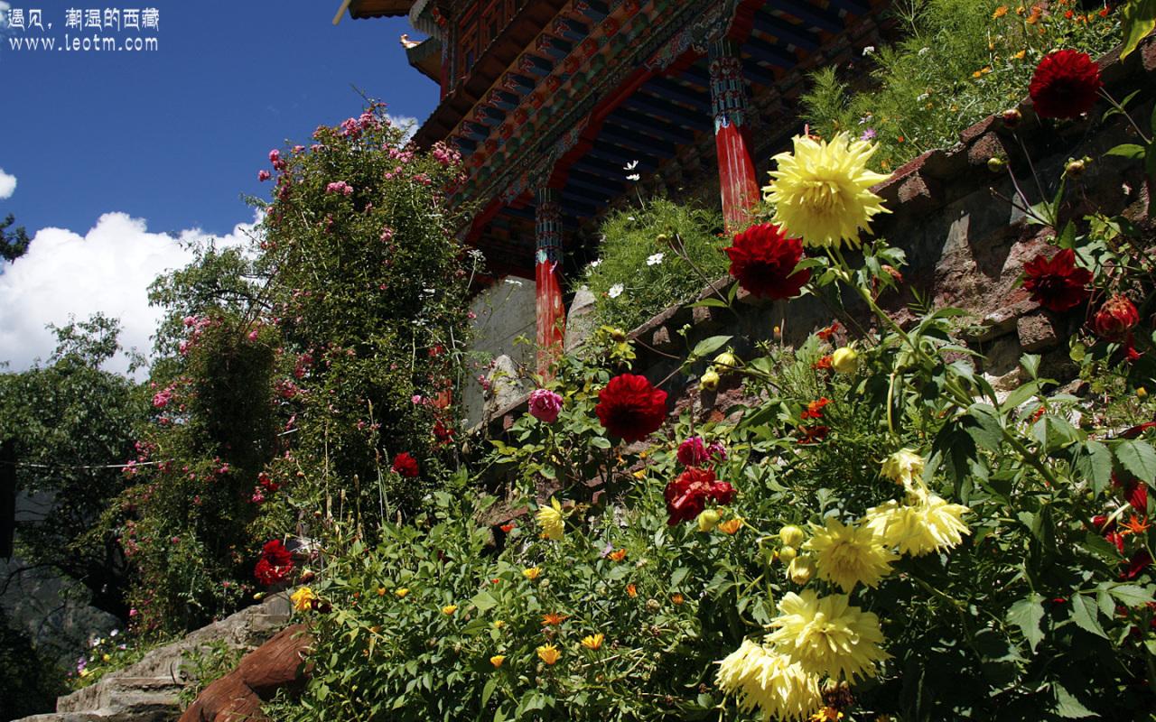 寺庙门口种满了花,漂亮极了