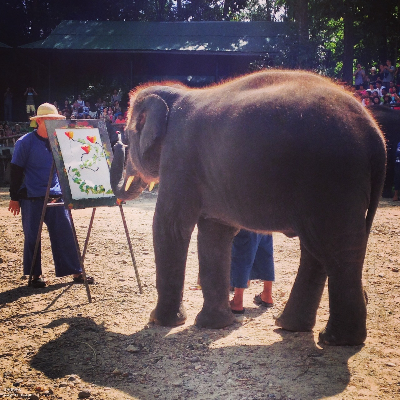 小象在作画