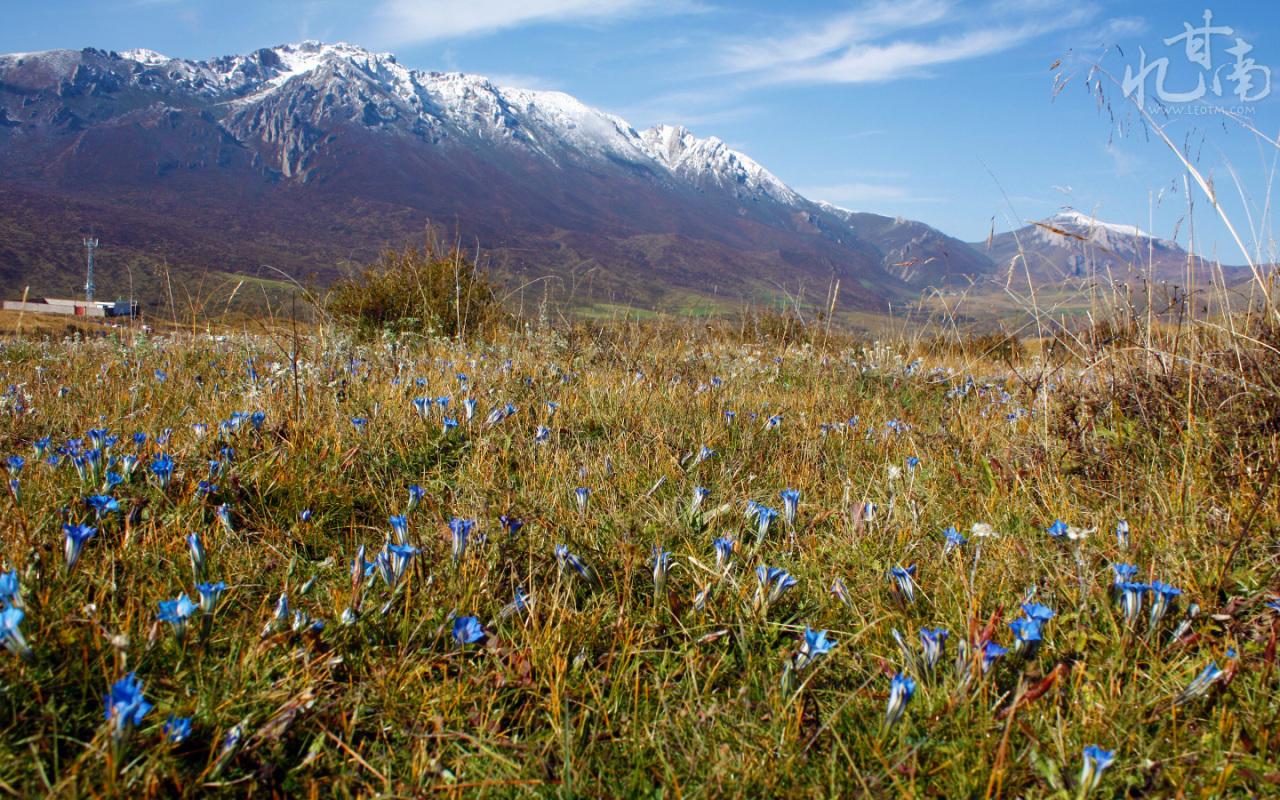 满山遍野都是漂亮的小兰花。