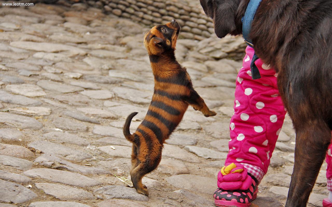 """在池塘边碰上一条名叫""""斑斑""""的狗,TA妈妈说生来就是这样,不是染的!"""