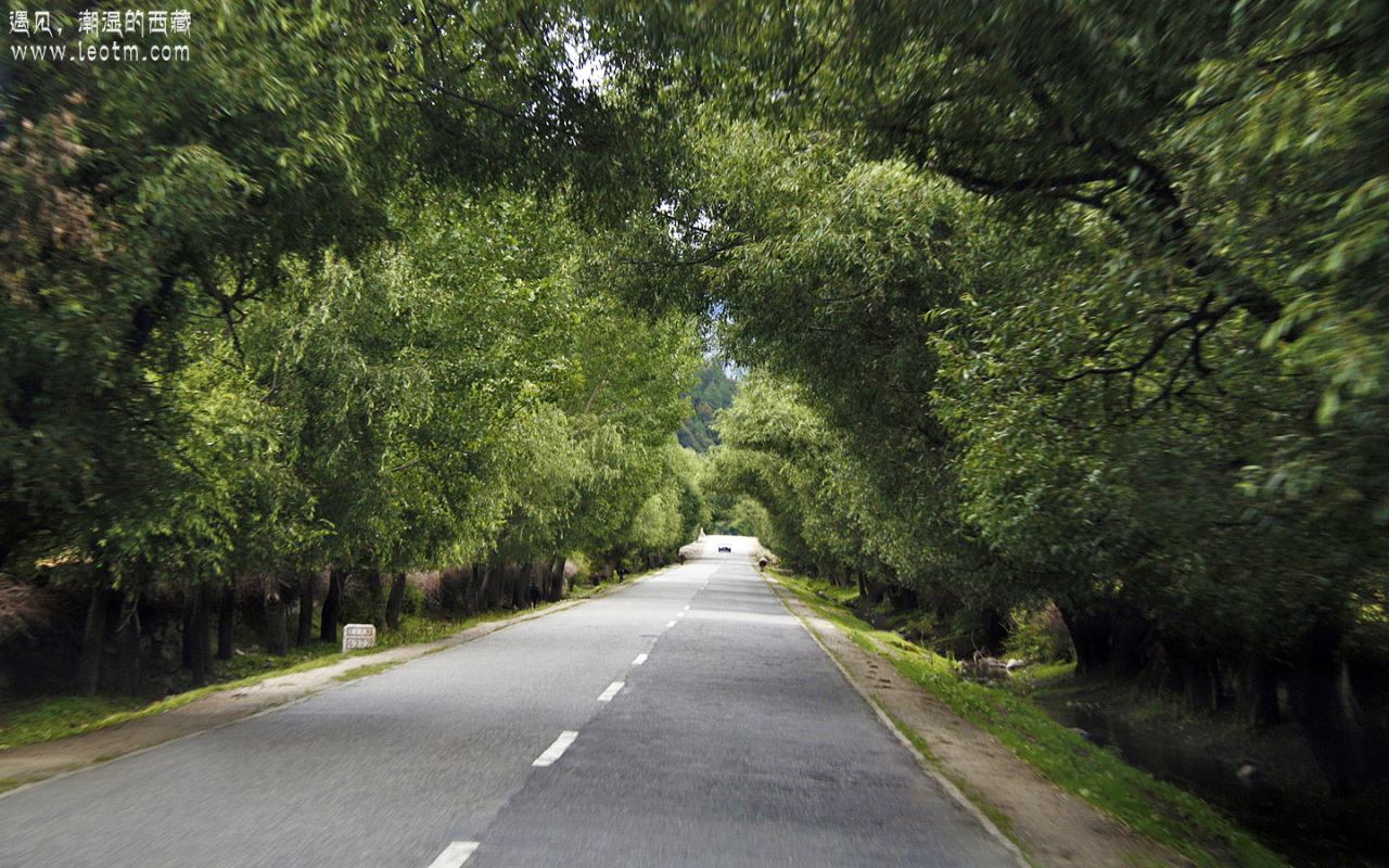 前往林芝的途中,很多地方道路两旁都是这样高大的柳树,被来往的大车剐成一个个拱形的通道,煞是好看。