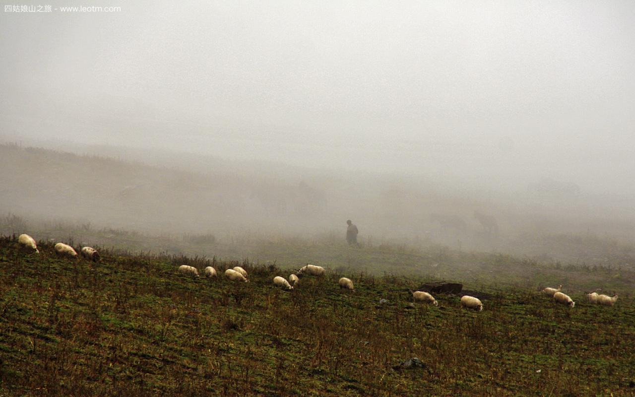 浓雾中牧羊人