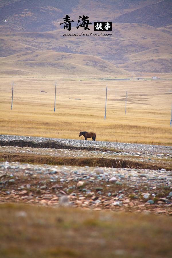 爱上一匹马,可是他有他的草原。