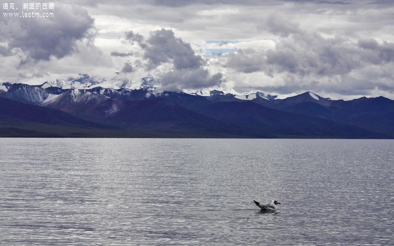 湖里的海鸥