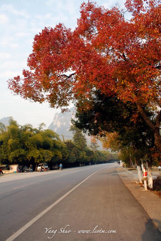 道旁的不知道什么树,叶子红了一大片,是秋季么?明明是冬天了啊~