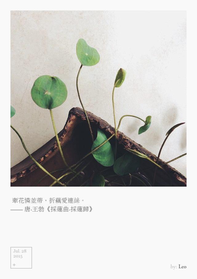 牵花怜并蒂,折藕爱连丝。 ——唐,王勃,《采莲曲-采莲归》 Jul 28, 2015