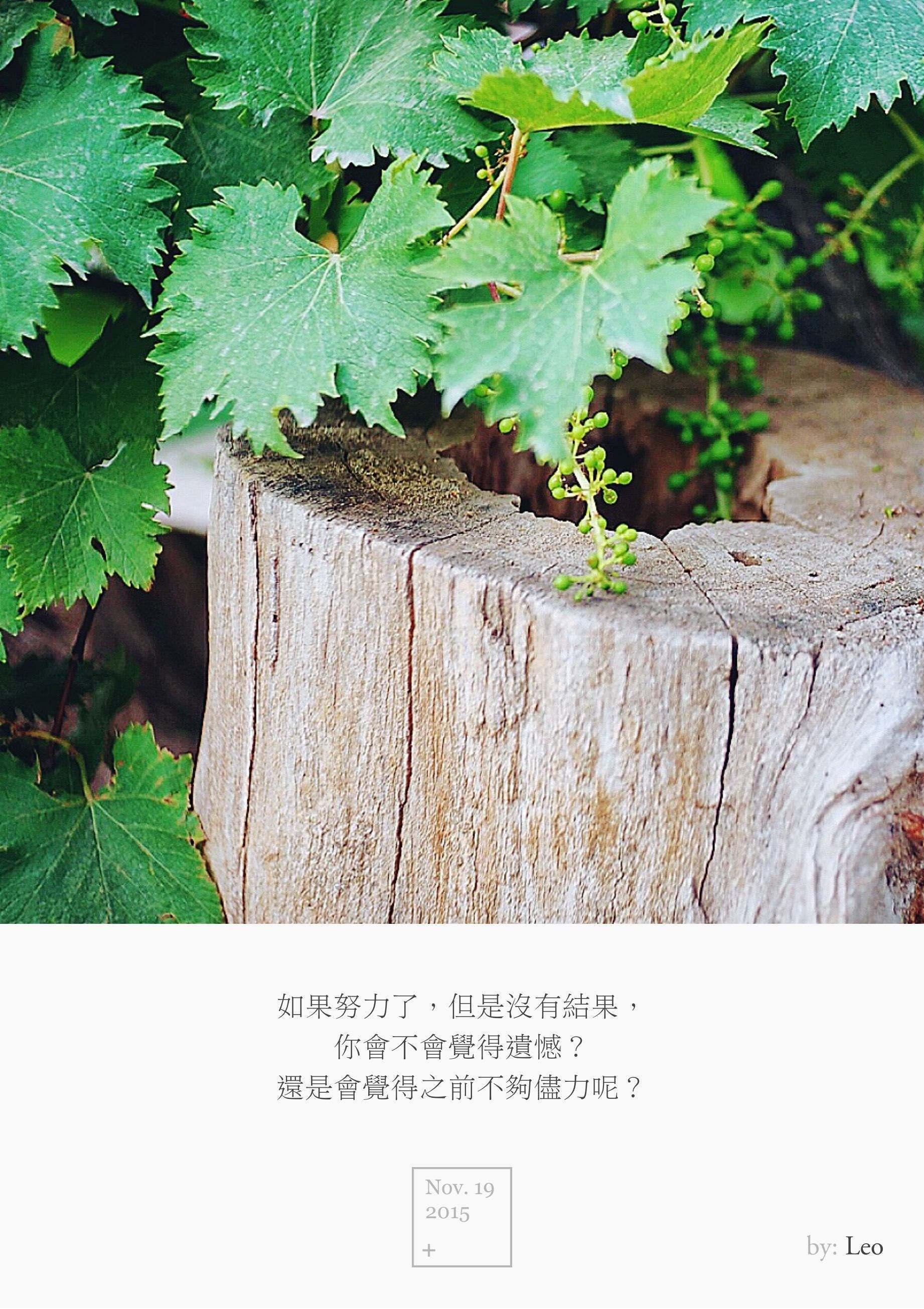 葡萄 木桩