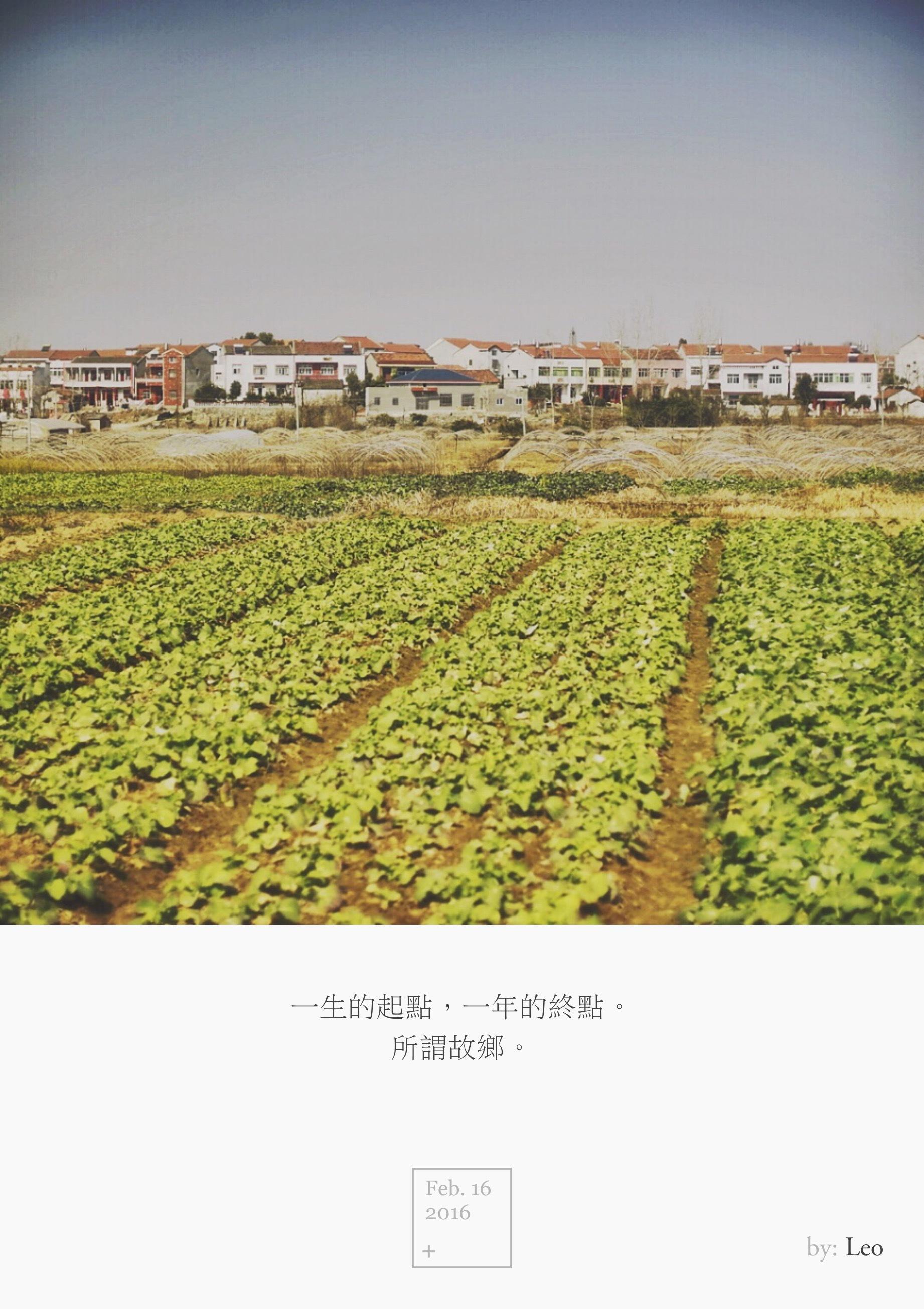 乡村油菜花