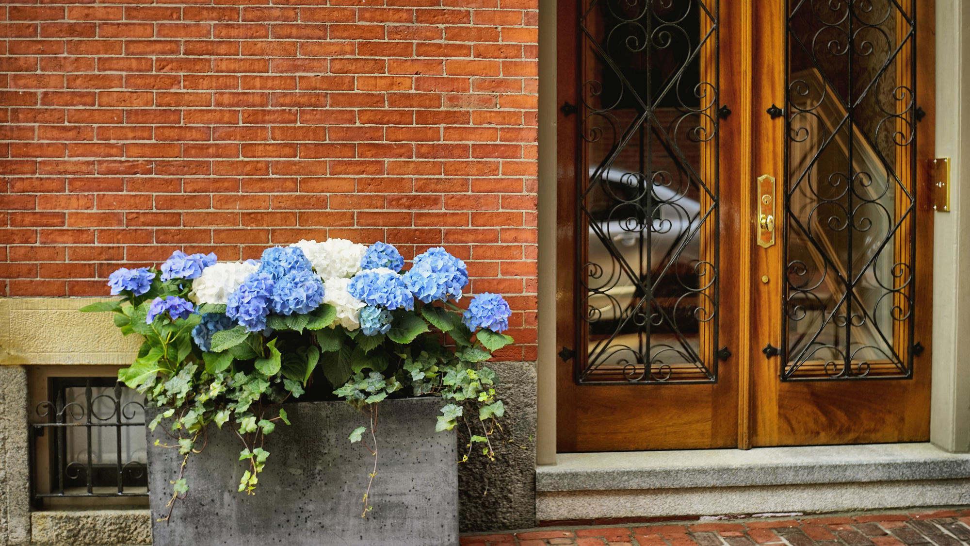 门口的绣球花