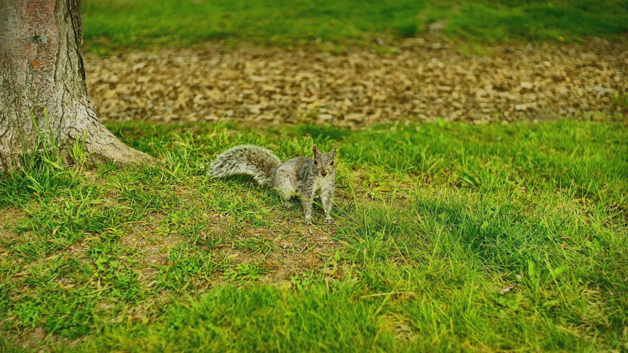 随处可见的小松鼠
