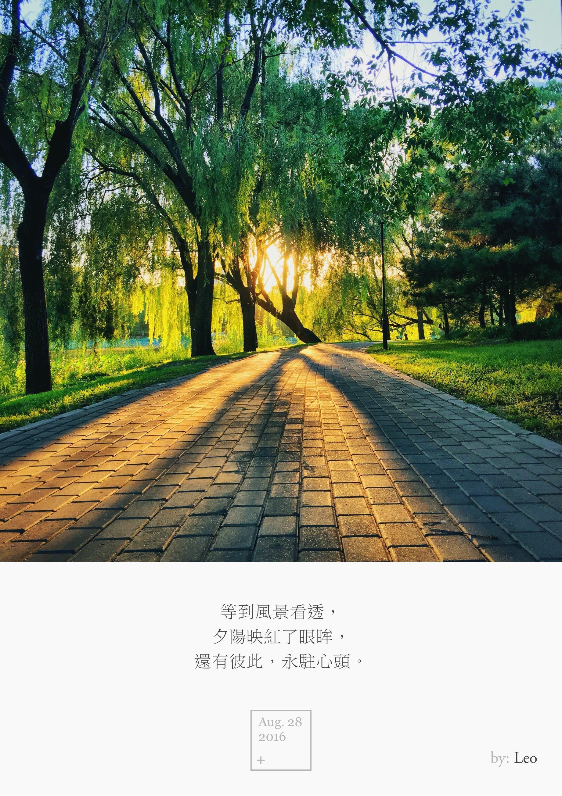 树影 落日