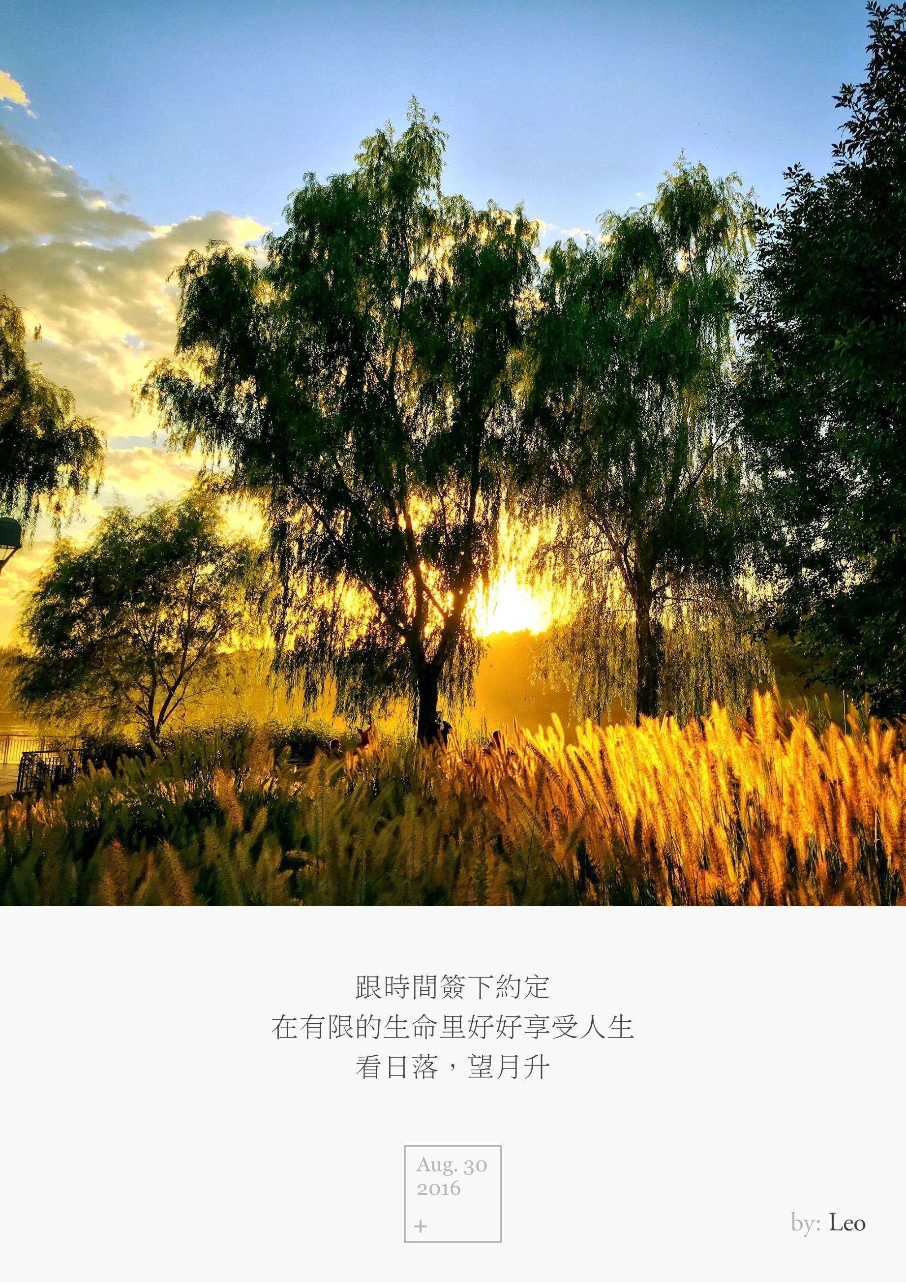 树影 夕阳