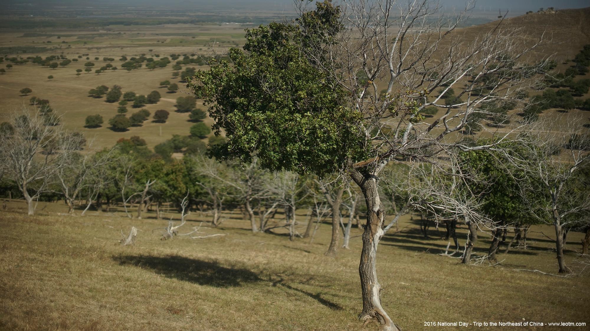 代钦塔拉五角枫保护区