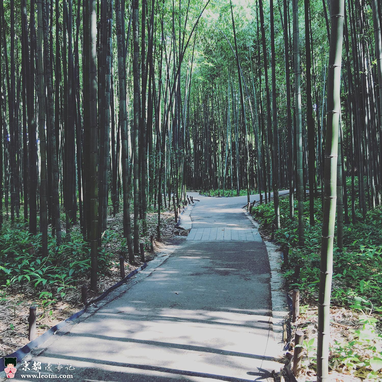 天龙寺旁的竹林